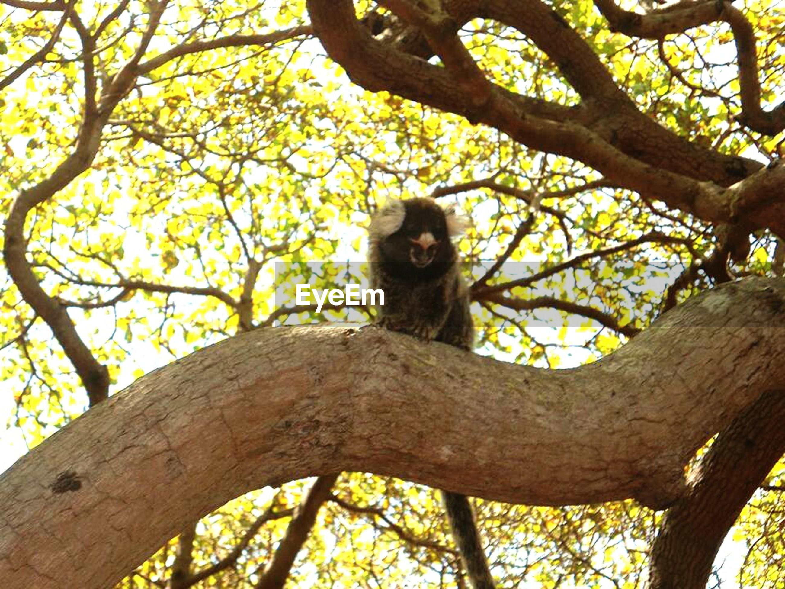 tree, low angle view, branch, animal themes, one animal, tree trunk, wildlife, animals in the wild, monkey, nature, sitting, outdoors, growth, day, mammal, no people, clear sky, sky, primate, looking at camera
