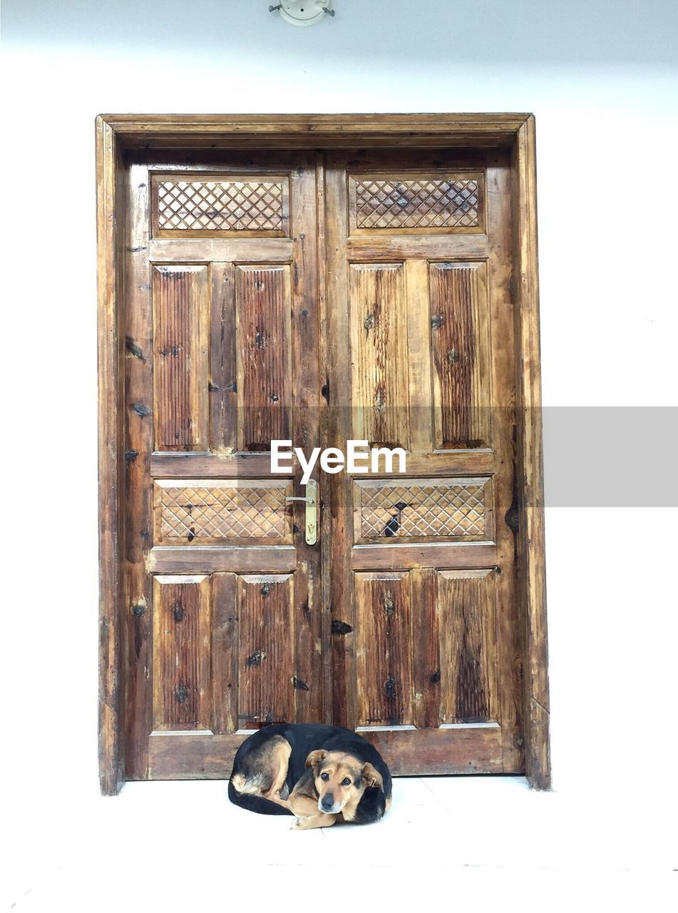 door, closed, wood - material, animal themes, no people, mammal, pets, white background, domestic animals, day, indoors, close-up
