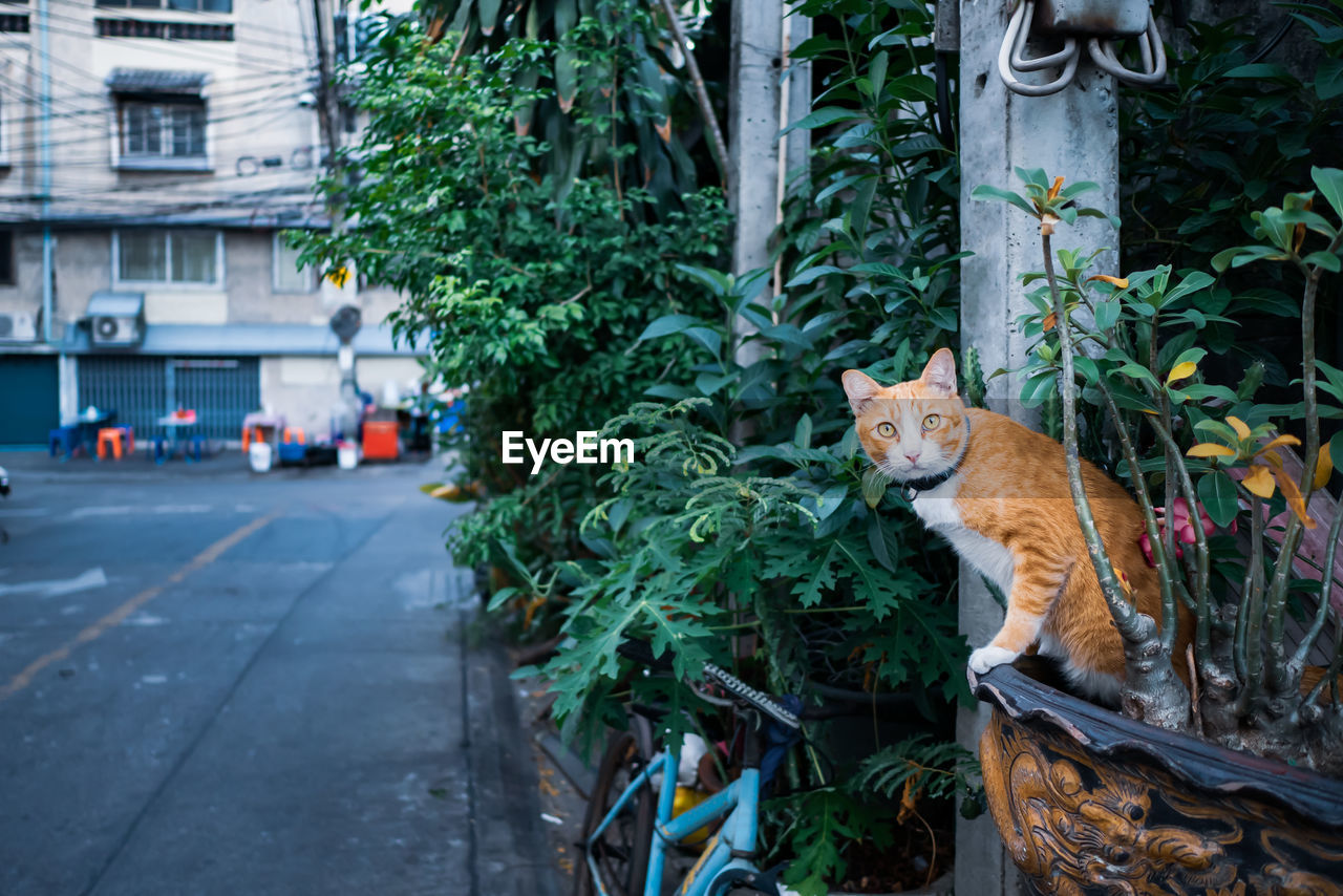 mammal, animal themes, animal, one animal, plant, pets, domestic animals, domestic, portrait, tree, day, vertebrate, nature, looking at camera, feline, focus on foreground, cat, no people, city, transportation, outdoors