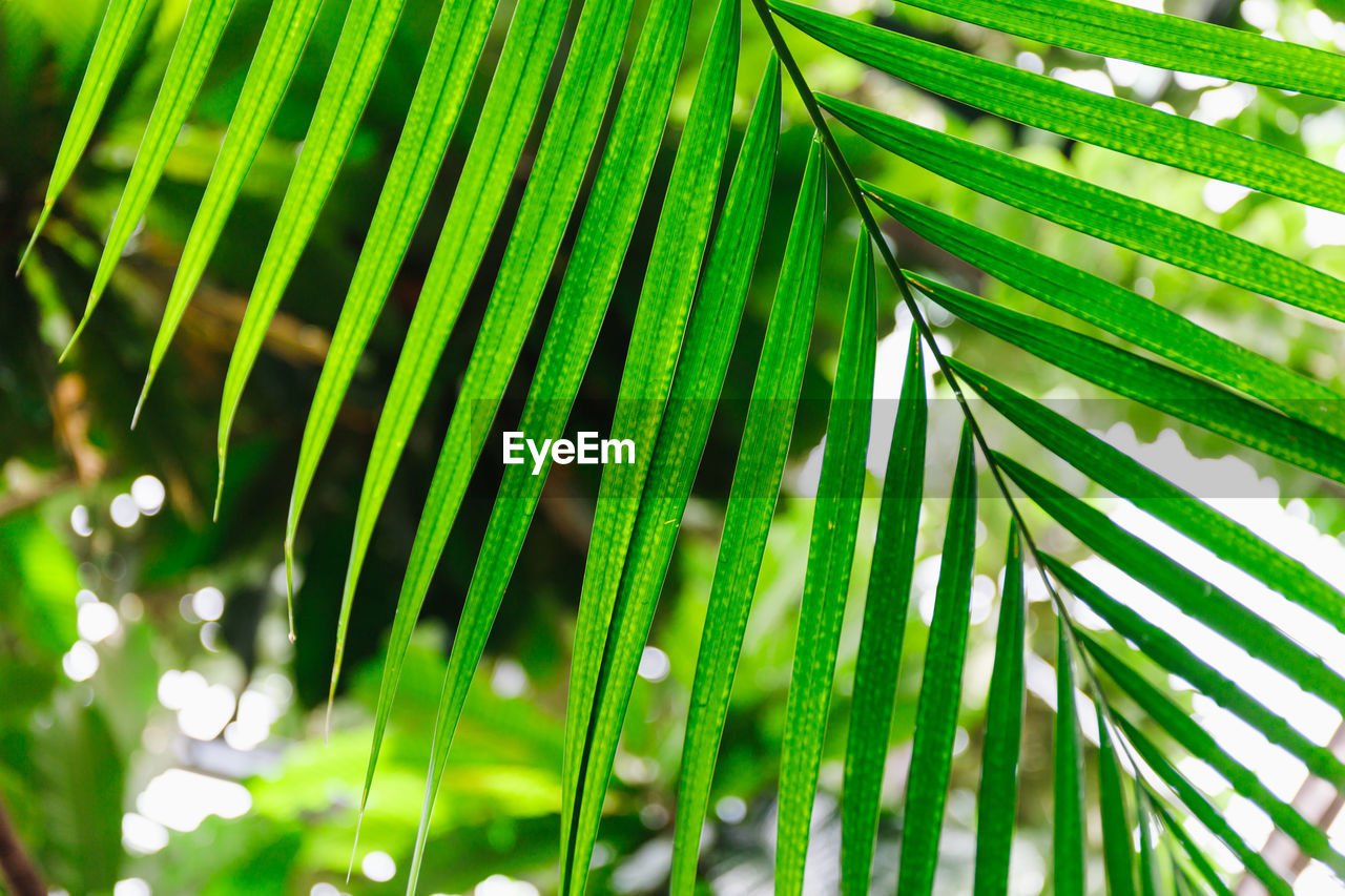 green color, palm tree, leaf, palm leaf, growth, plant, beauty in nature, no people, close-up, plant part, nature, day, tree, focus on foreground, outdoors, frond, tropical climate, natural pattern, freshness, pattern, leaves, bamboo - plant