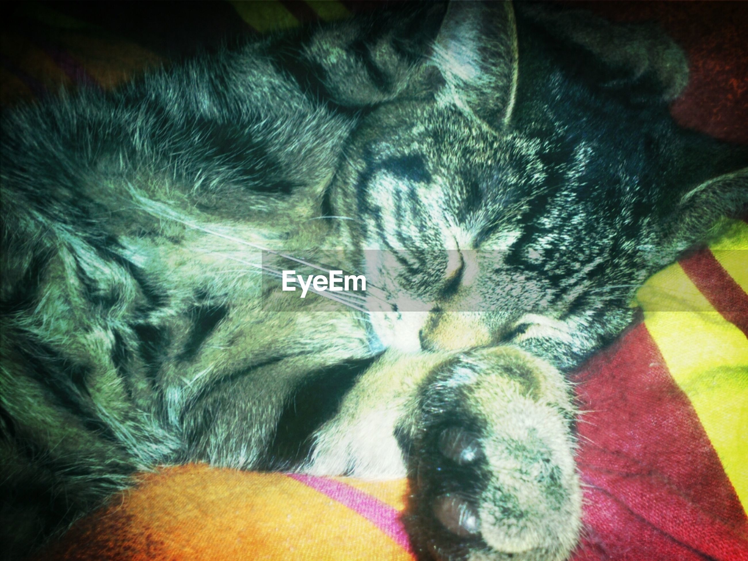 indoors, animal themes, one animal, pets, domestic animals, close-up, mammal, bed, sleeping, domestic cat, auto post production filter, animal head, high angle view, animal body part, blanket, no people, fabric, relaxation, cat, home interior