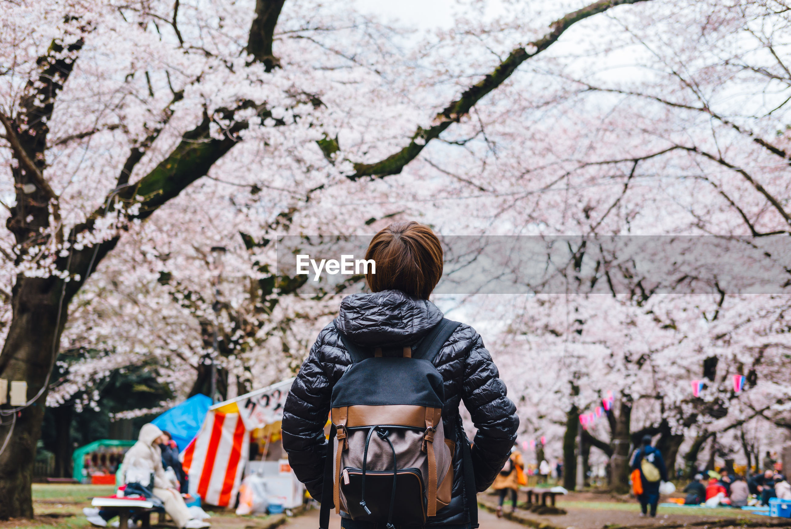 REAR VIEW OF WOMAN WITH CHERRY BLOSSOM FLOWERS