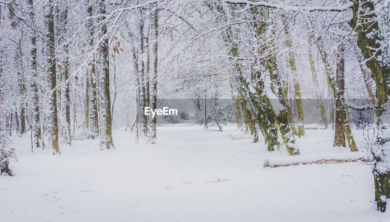 snow, winter, cold temperature, nature, white color, tranquility, tree, beauty in nature, tranquil scene, no people, outdoors, forest, day, bare tree, scenics