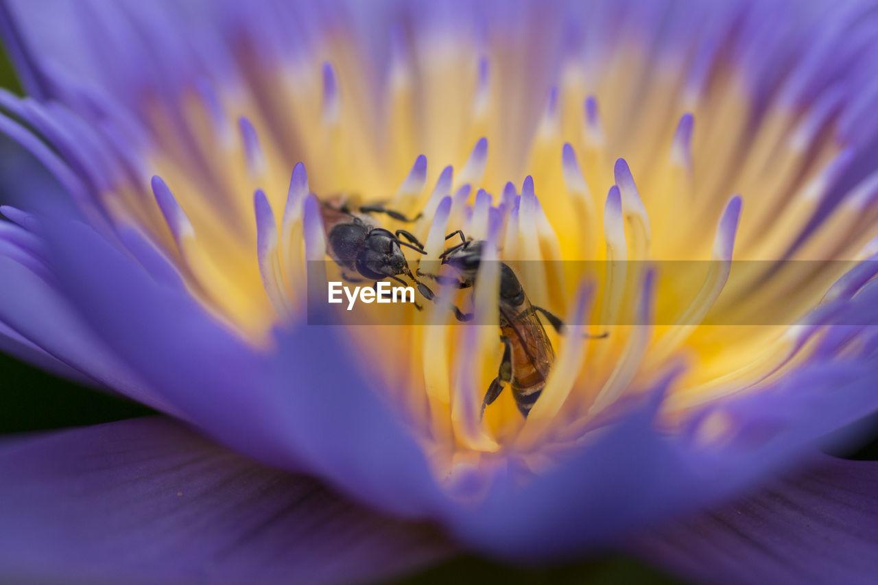 MACRO SHOT OF BEES IN FLOWER HEAD