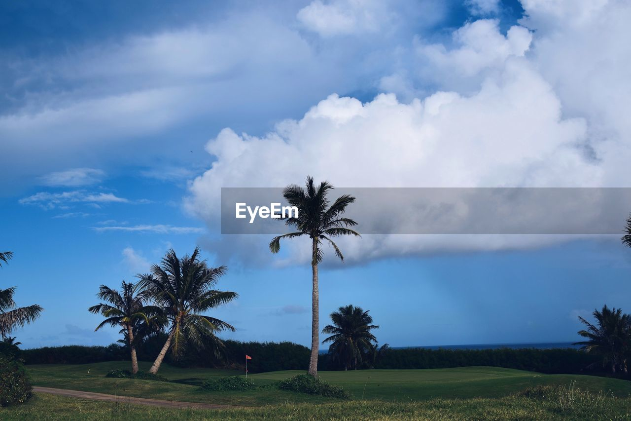 sky, cloud - sky, plant, palm tree, tropical climate, beauty in nature, scenics - nature, tree, land, growth, nature, tranquil scene, field, landscape, tranquility, environment, day, no people, non-urban scene, idyllic, outdoors, coconut palm tree