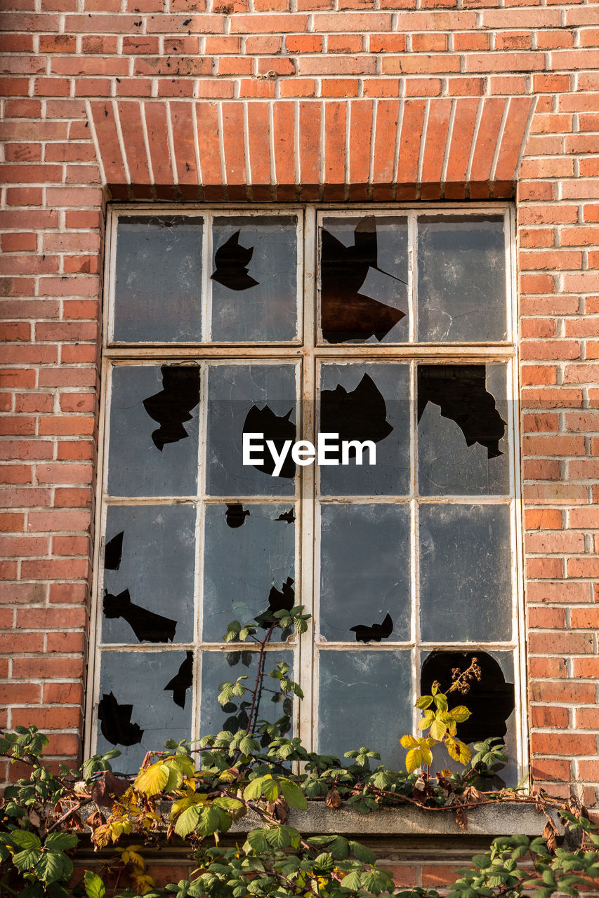building exterior, brick, built structure, architecture, window, brick wall, wall, building, no people, day, nature, outdoors, plant, wall - building feature, low angle view, glass - material, animal, vertebrate, mammal, old
