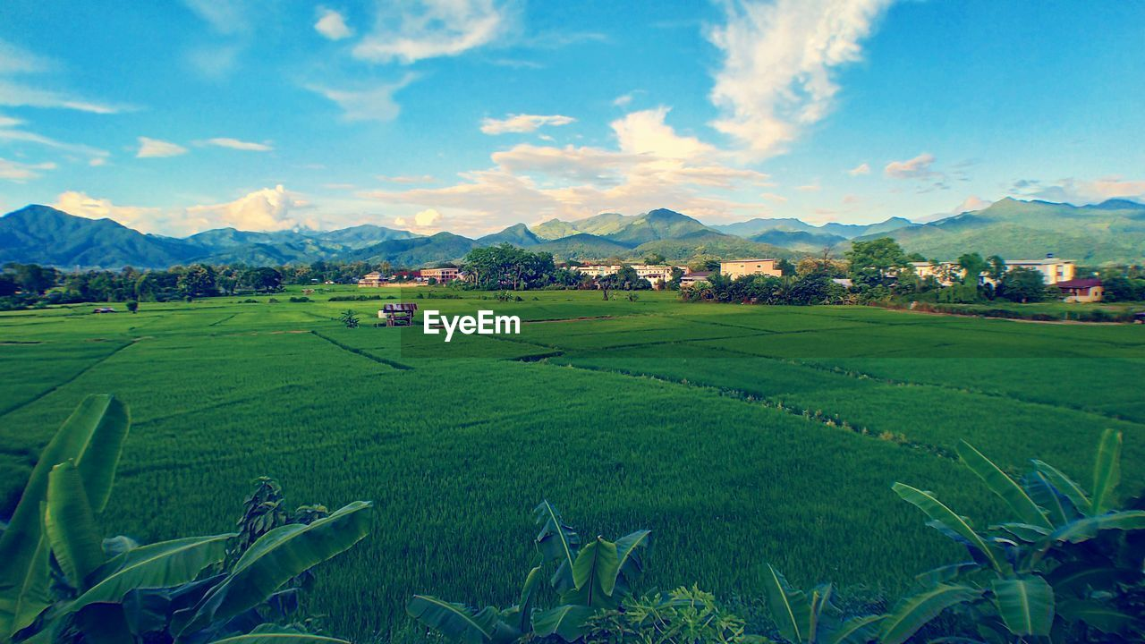 Mountain Farm Landscape Agriculture Rural Scene Scenics Field Mountain Range Nature Outdoors No People Beauty In Nature Rice Paddy Grass Green Color Tranquility Sky Sunset Day Terraced Field