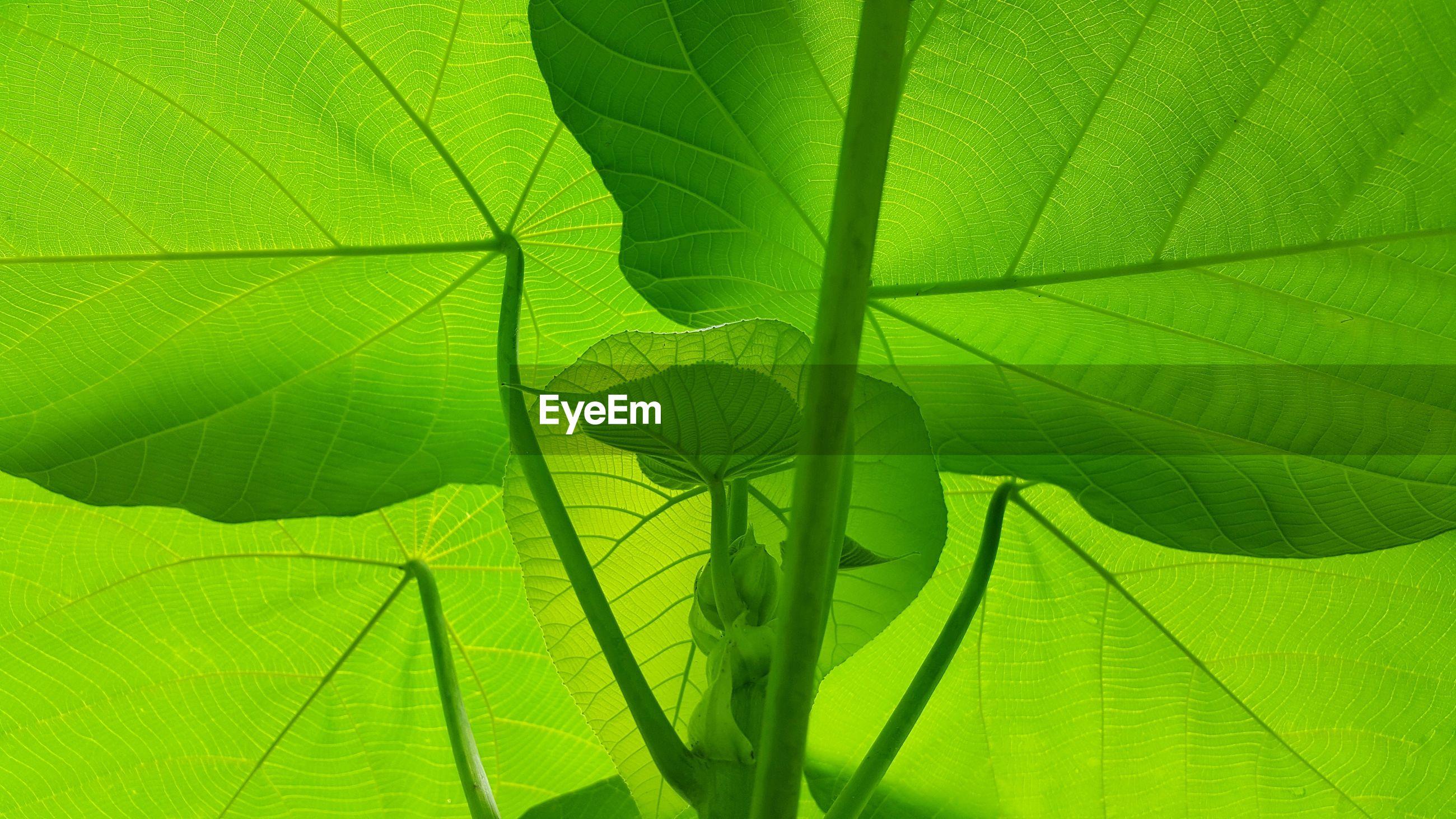 Close-up of green leaf