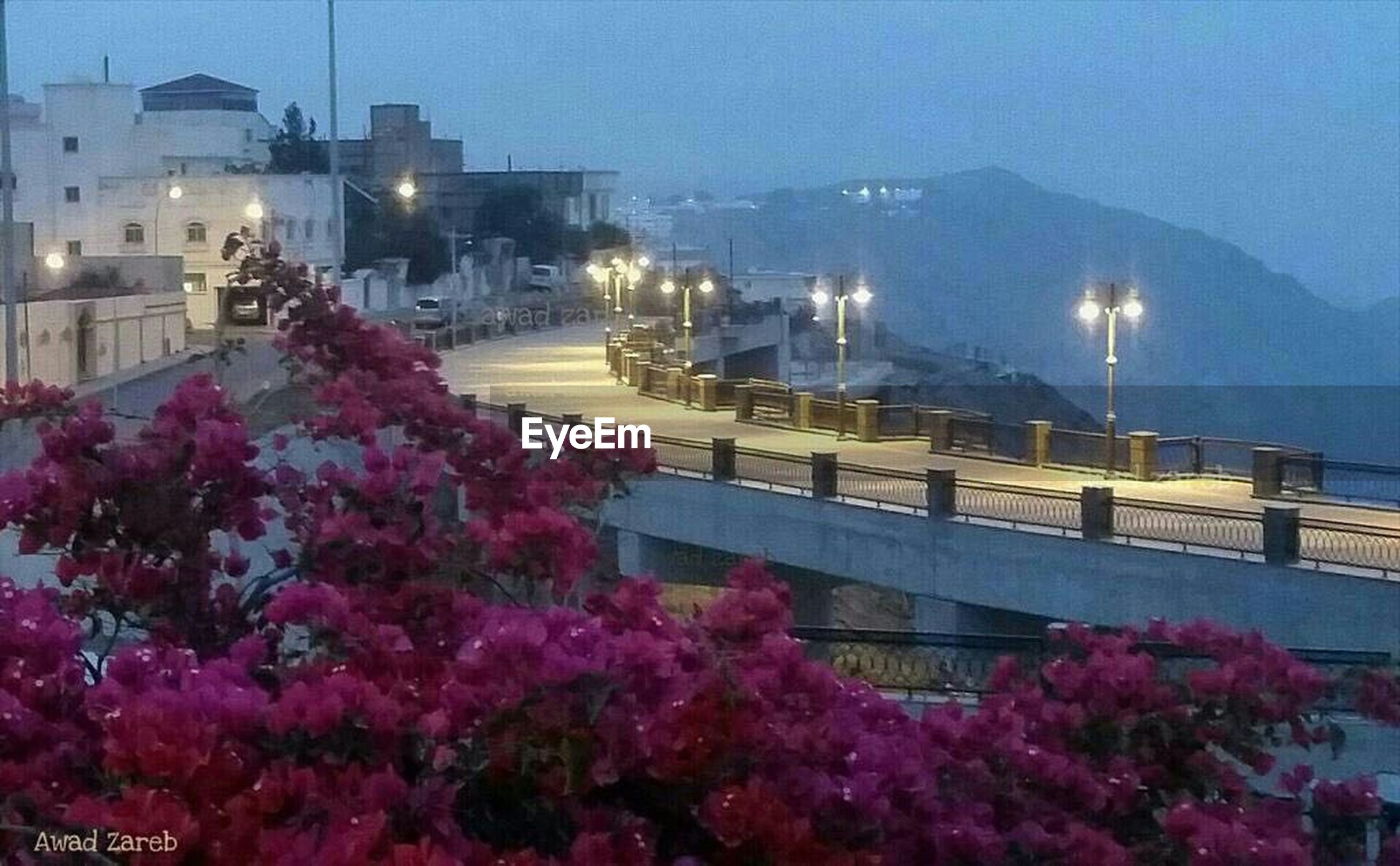 built structure, architecture, building exterior, illuminated, night, flower, city, street light, sky, lighting equipment, railing, low angle view, tree, connection, growth, pink color, outdoors, bridge - man made structure, city life, clear sky