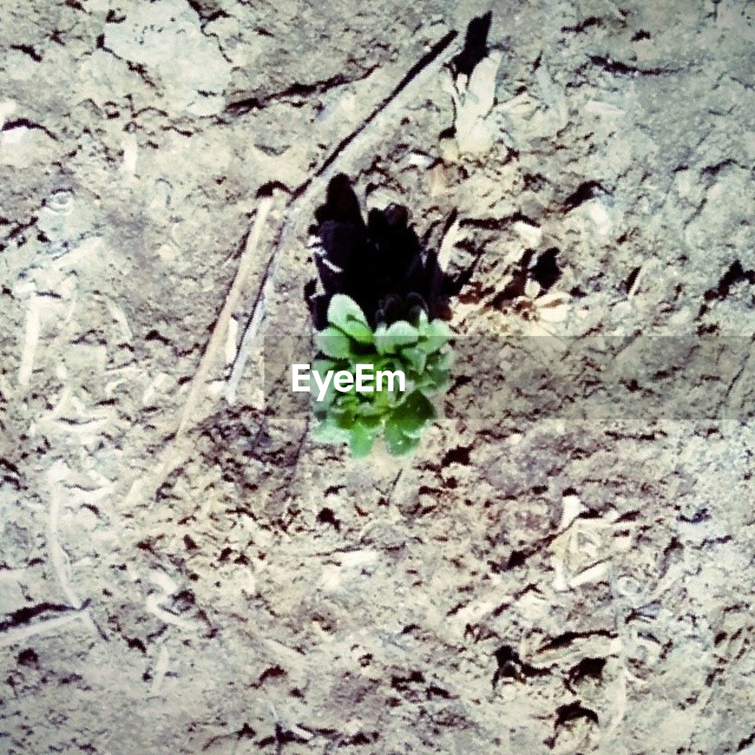 leaf, growth, plant, high angle view, nature, growing, wall - building feature, green color, close-up, day, outdoors, no people, stem, sunlight, freshness, flower, fragility, ground, dirt, textured