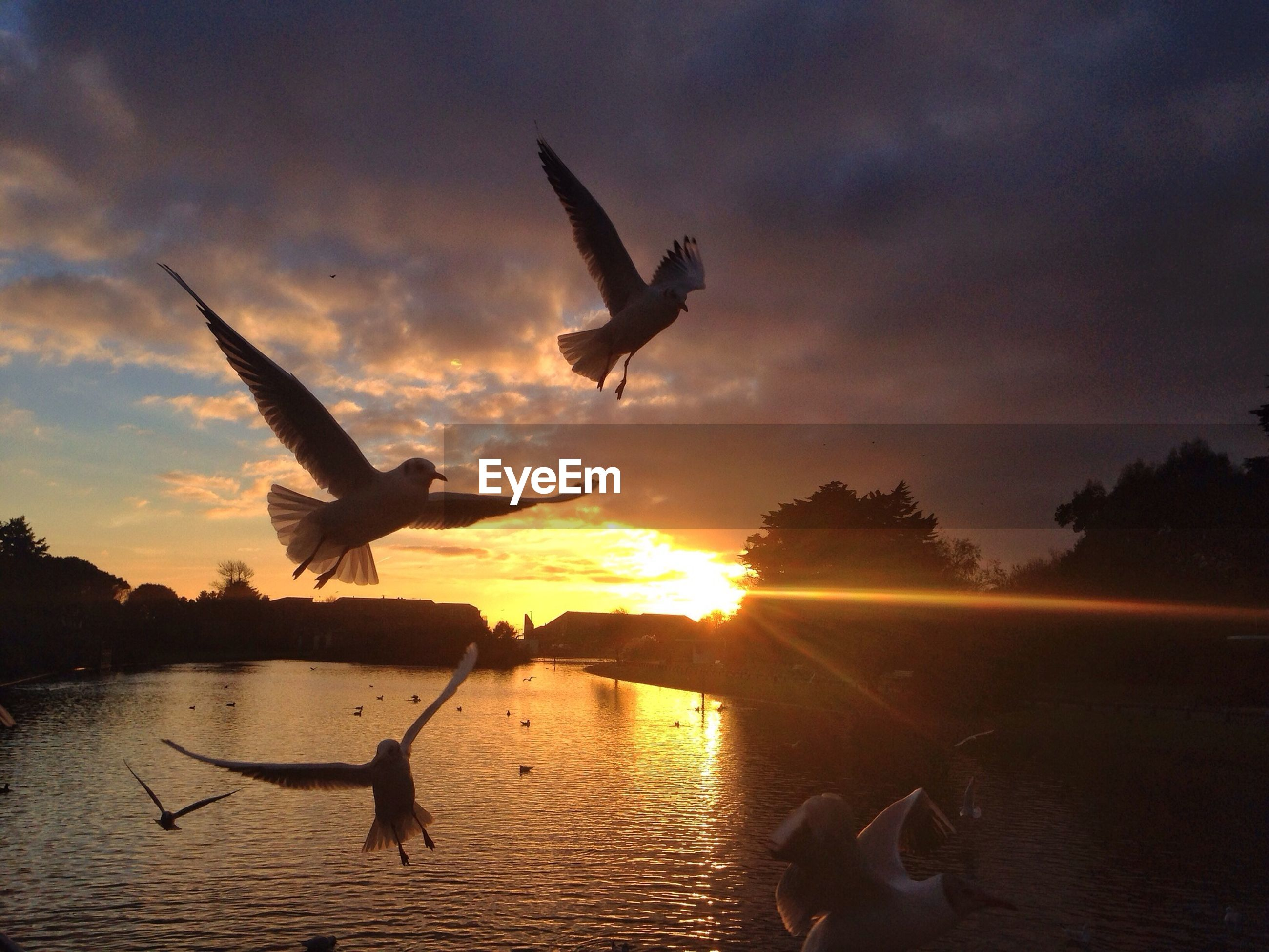 Birds flying over calm lake at sunset