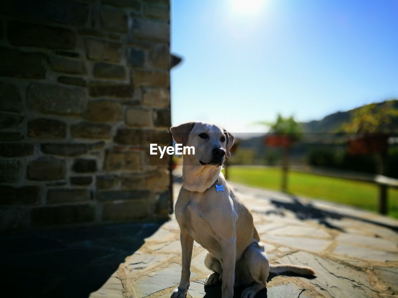 dog, domestic animals, pets, animal themes, one animal, mammal, sunlight, day, outdoors, no people, built structure, sky, building exterior, architecture, nature, close-up