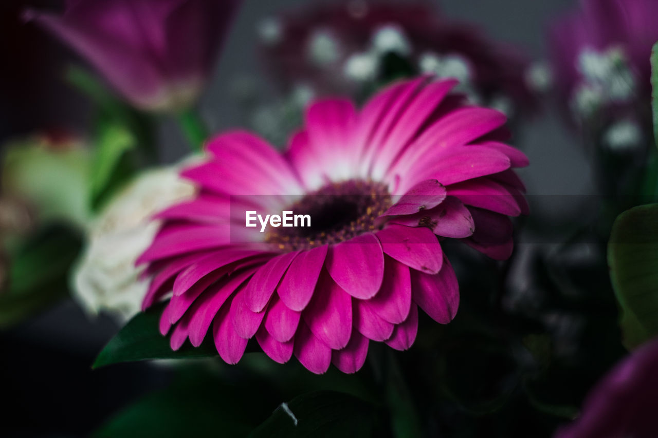 flower, fragility, beauty in nature, petal, flower head, focus on foreground, growth, nature, freshness, day, plant, outdoors, blooming, close-up, no people