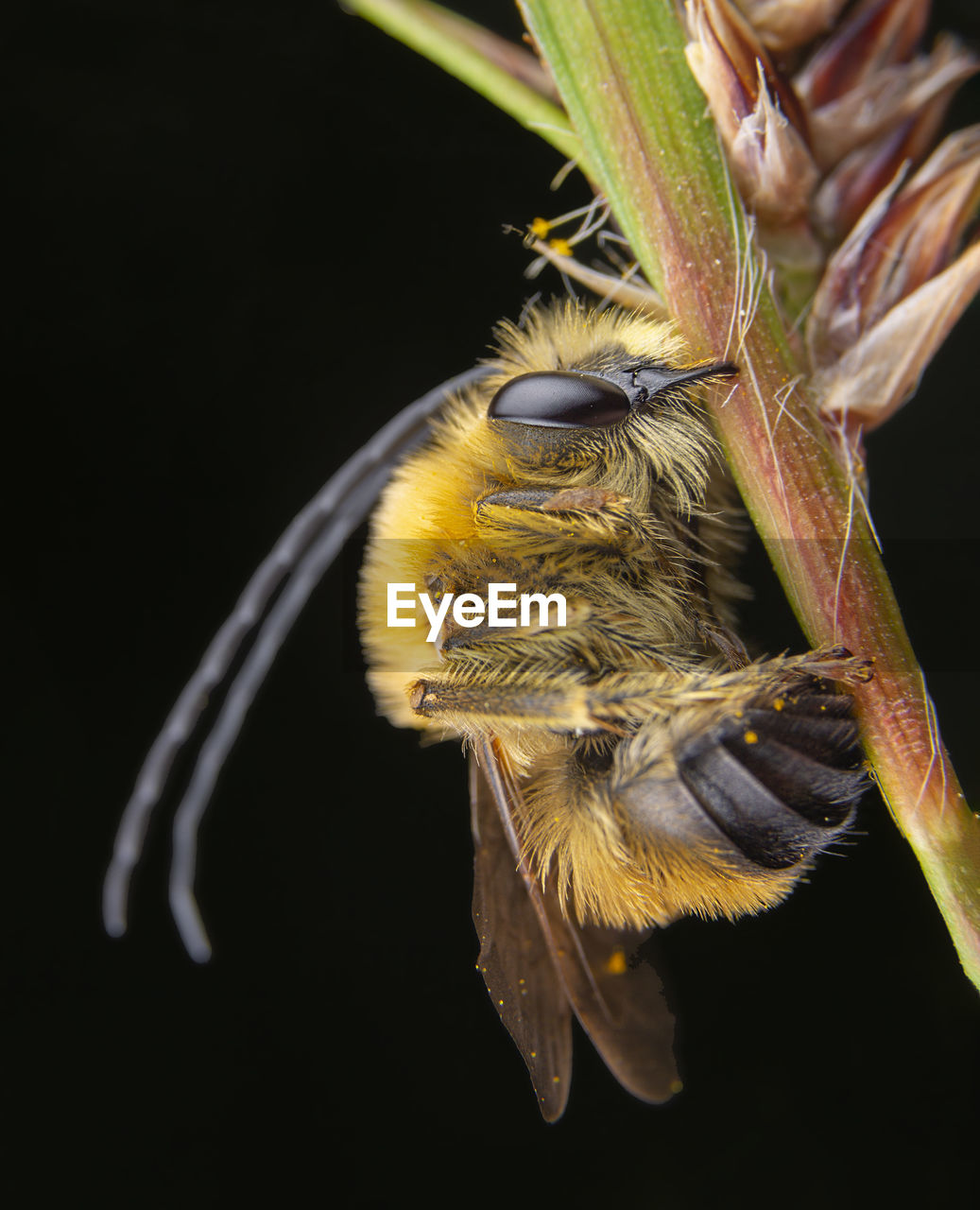 CLOSE-UP OF BEE ON A FLOWER