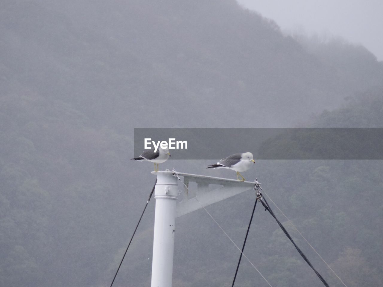 Seagull Perching On Pole Against Sky