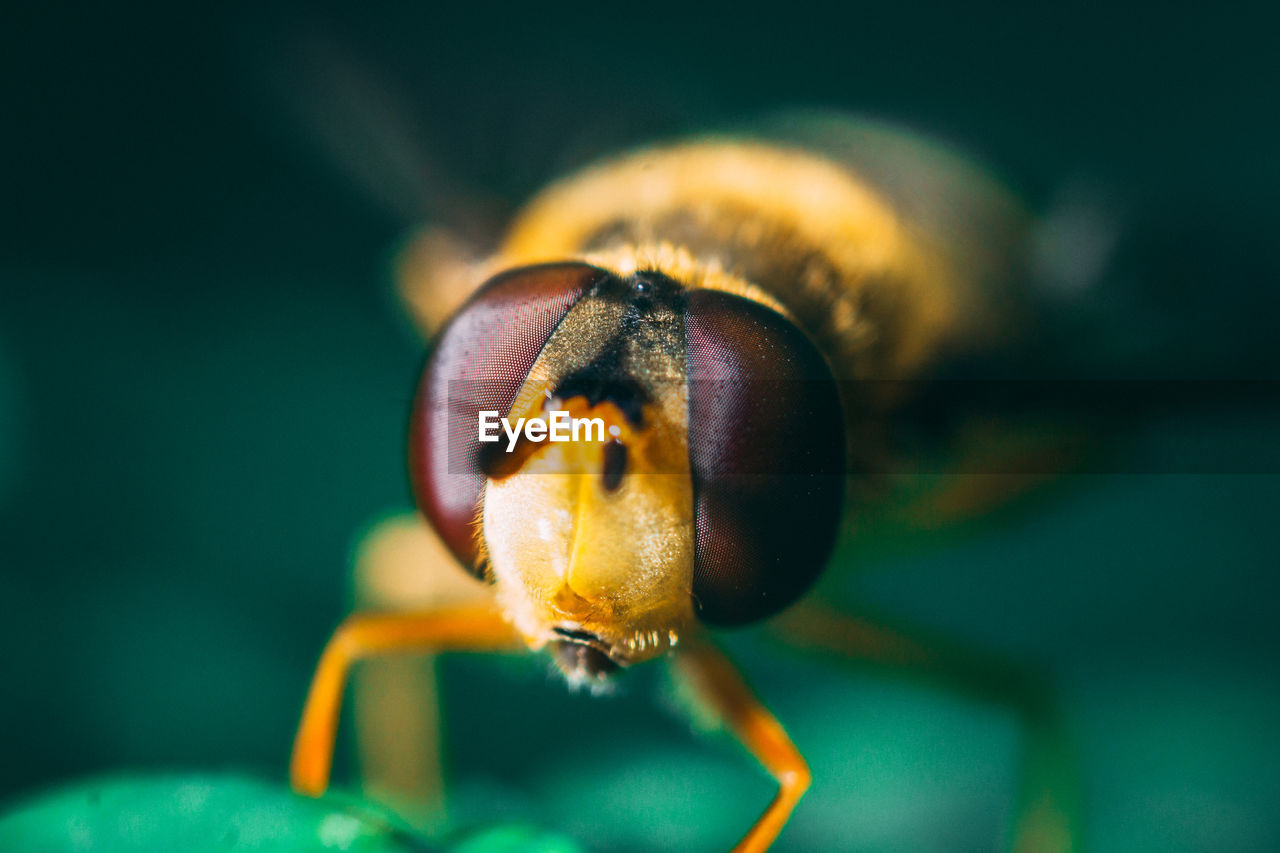 Extreme close-up of insect