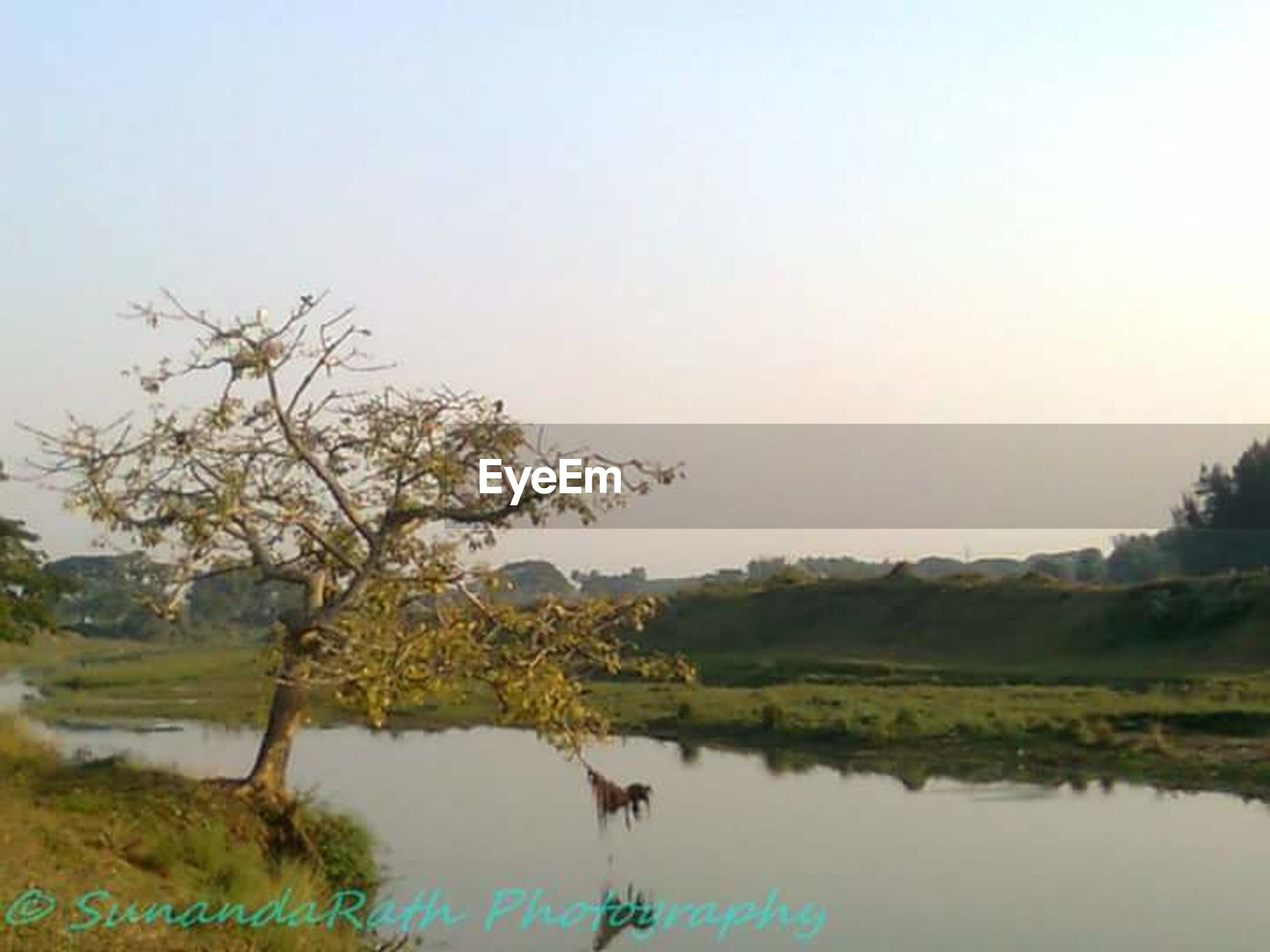 water, clear sky, lake, tranquility, tranquil scene, reflection, tree, scenics, copy space, nature, beauty in nature, waterfront, landscape, grass, field, sky, river, non-urban scene, countryside, idyllic