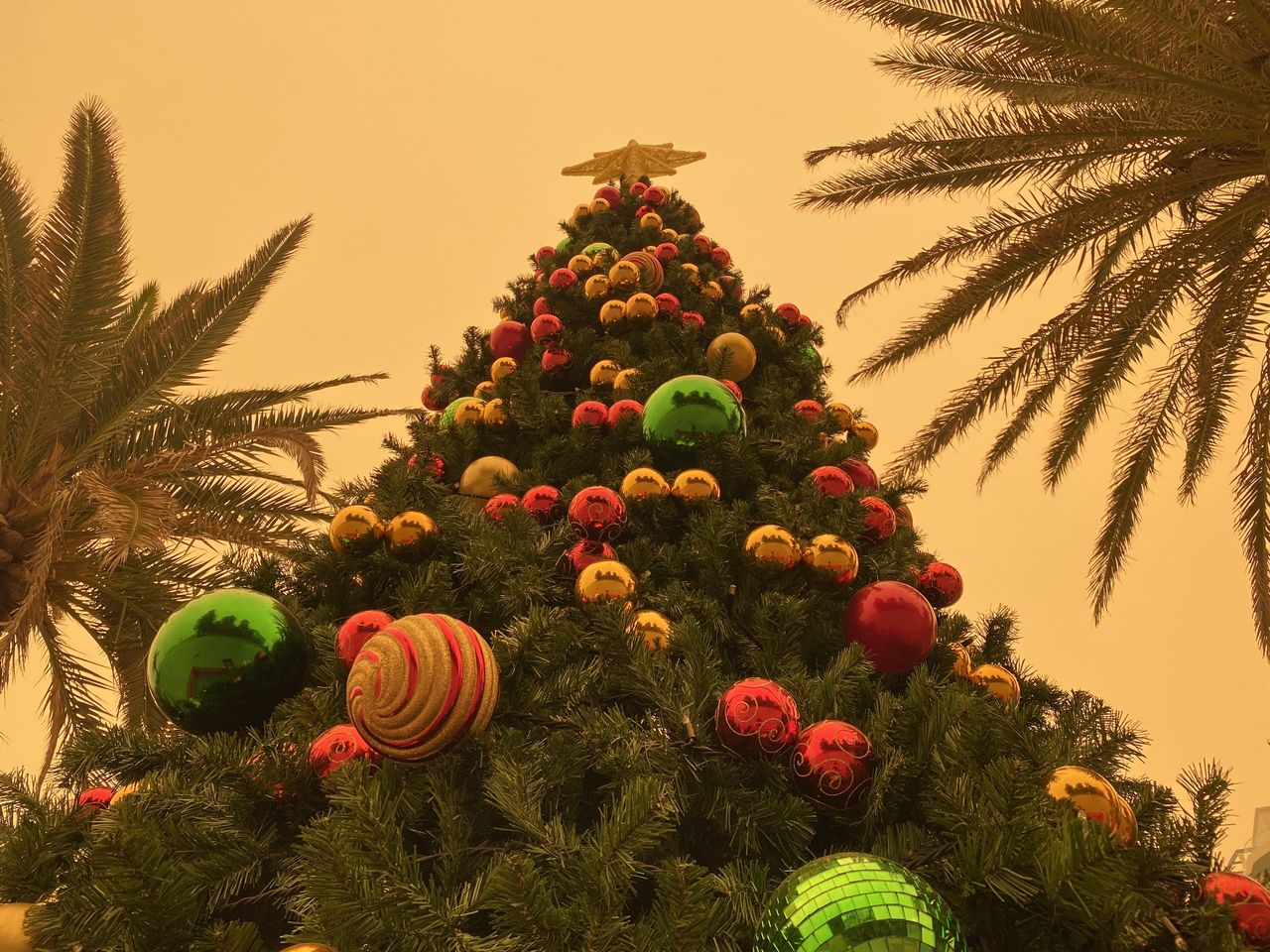 plant, tree, sky, nature, celebration, growth, green color, no people, beauty in nature, decoration, christmas decoration, land, outdoors, day, christmas, palm tree, sunset, freshness, holiday, christmas ornament
