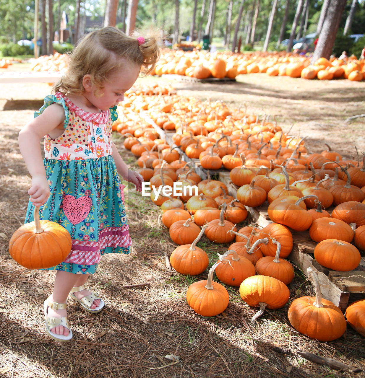 Girl Carrying Pumpkin At Park During Autumn