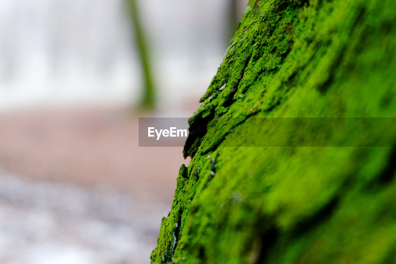 green color, moss, nature, growth, outdoors, focus on foreground, close-up, day, no people, beauty in nature, textured, lichen, tree trunk, tree, sky