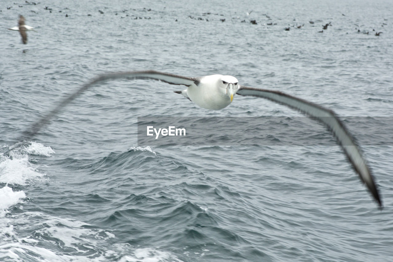 Close-Up Of Seagull Flying Over Sea