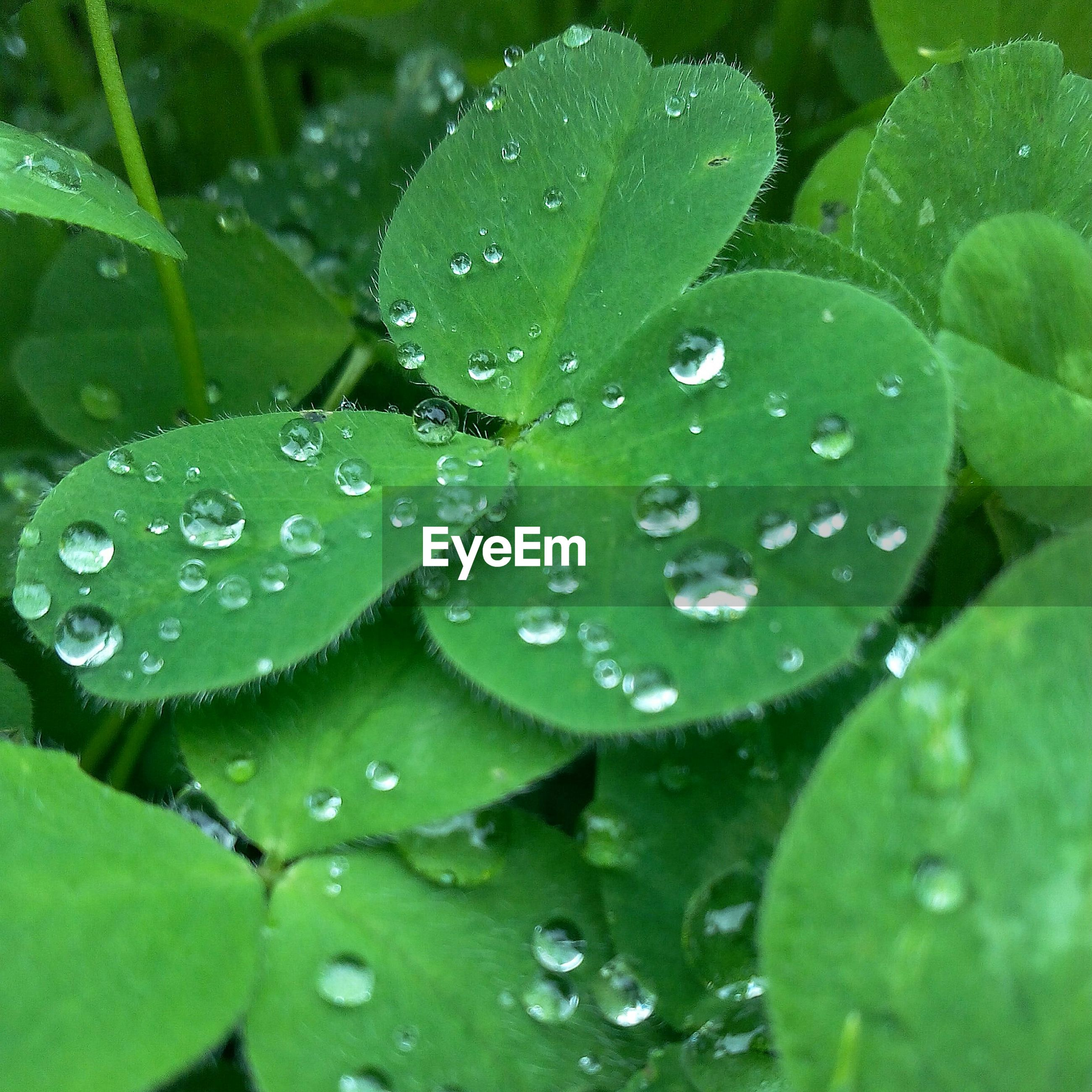 Close-up of water drops on plants