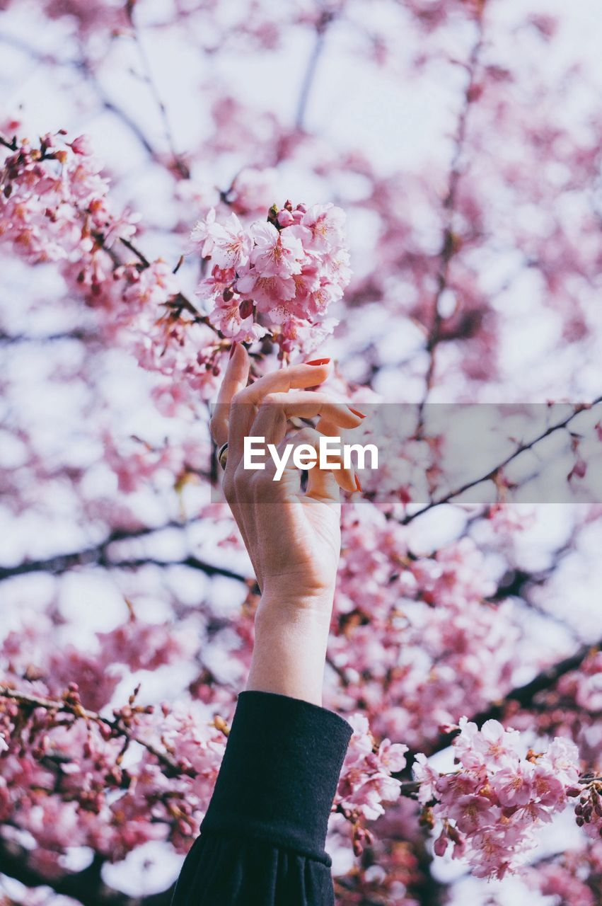 hand, one person, human hand, plant, freshness, flower, tree, human body part, pink color, fragility, holding, cherry blossom, vulnerability, flowering plant, nature, growth, real people, blossom, beauty in nature, day, springtime, finger, outdoors, body part, cherry tree