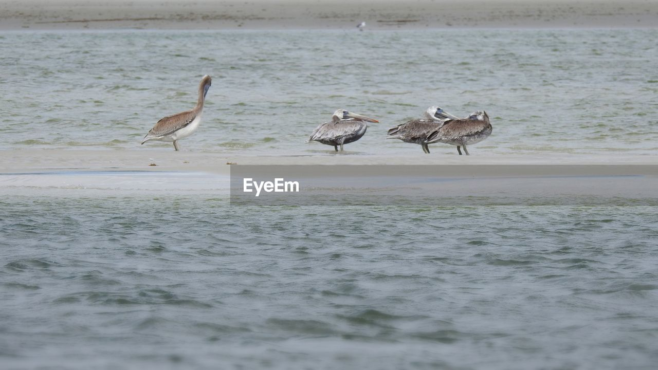 animal themes, animal, animal wildlife, animals in the wild, group of animals, bird, vertebrate, water, waterfront, sea, nature, no people, day, beauty in nature, water bird, outdoors, zoology, beach, land, flock of birds