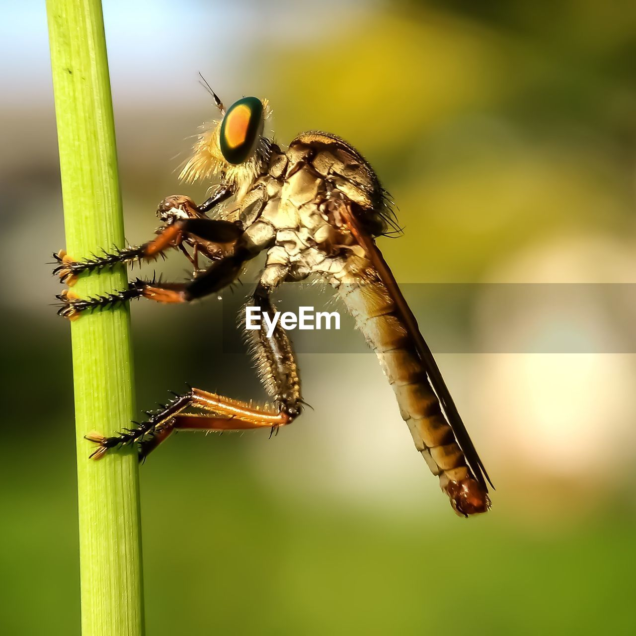 insect, invertebrate, animals in the wild, animal wildlife, animal themes, animal, one animal, close-up, focus on foreground, nature, plant, day, no people, green color, outdoors, selective focus, zoology, animal body part, beauty in nature, sunlight, animal eye