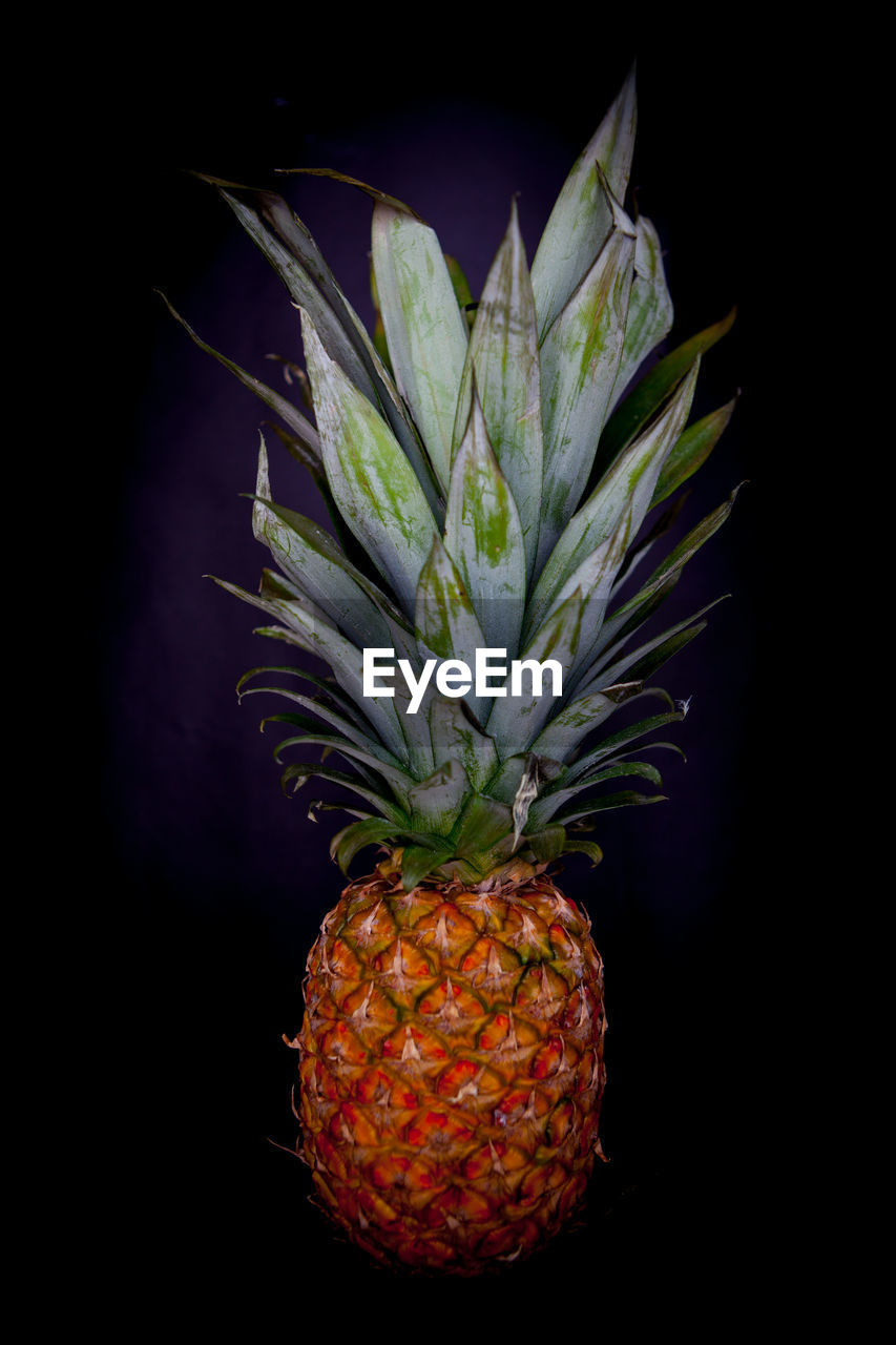 healthy eating, fruit, food, freshness, tropical fruit, pineapple, food and drink, wellbeing, studio shot, no people, black background, indoors, close-up, still life, nature, orange color, lychee, ripe, plant part, orange