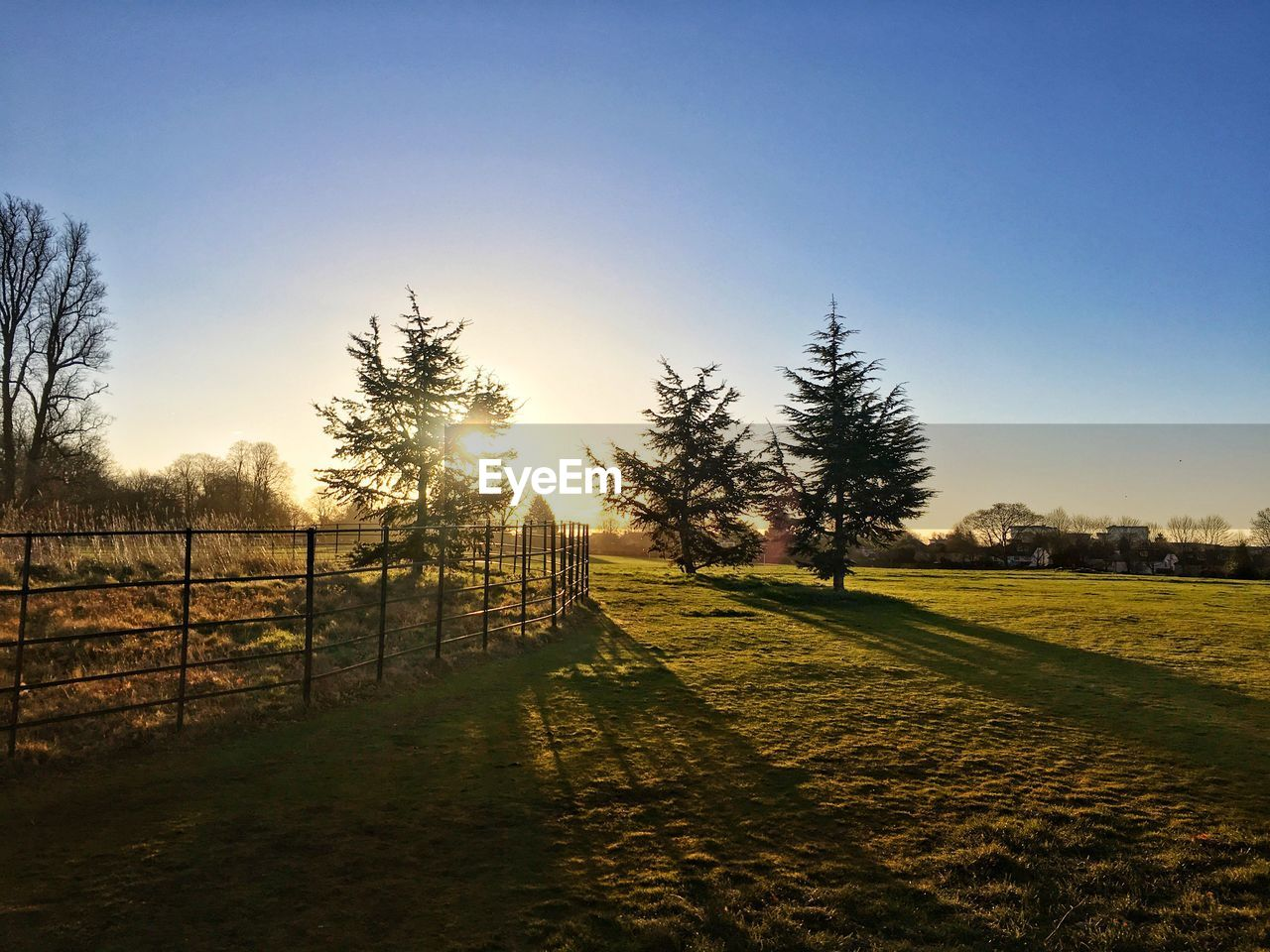 sky, plant, tree, tranquility, tranquil scene, scenics - nature, landscape, field, nature, land, beauty in nature, environment, sunlight, grass, boundary, barrier, fence, no people, clear sky, non-urban scene, outdoors
