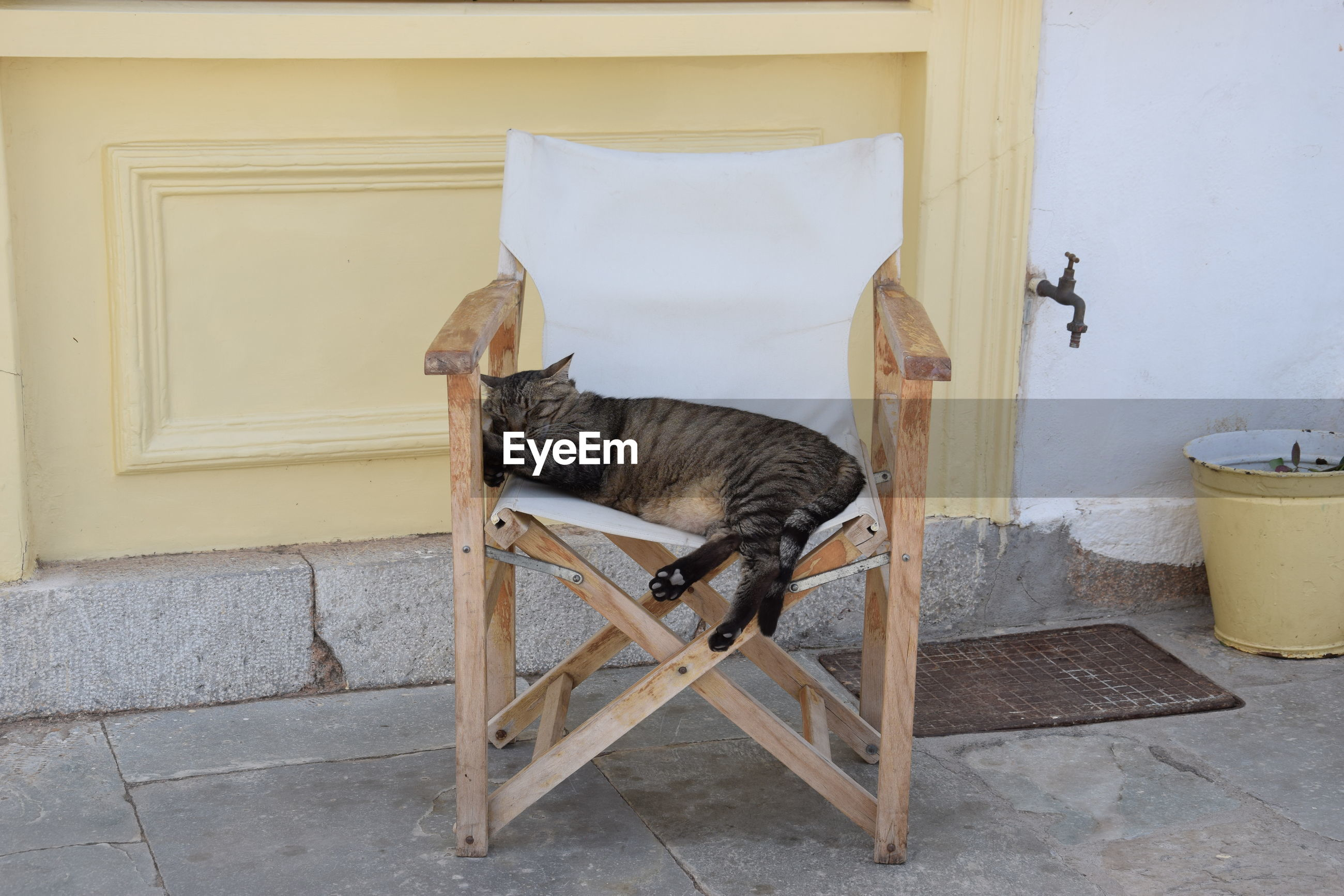 CAT ON CHAIR AGAINST BUILDING