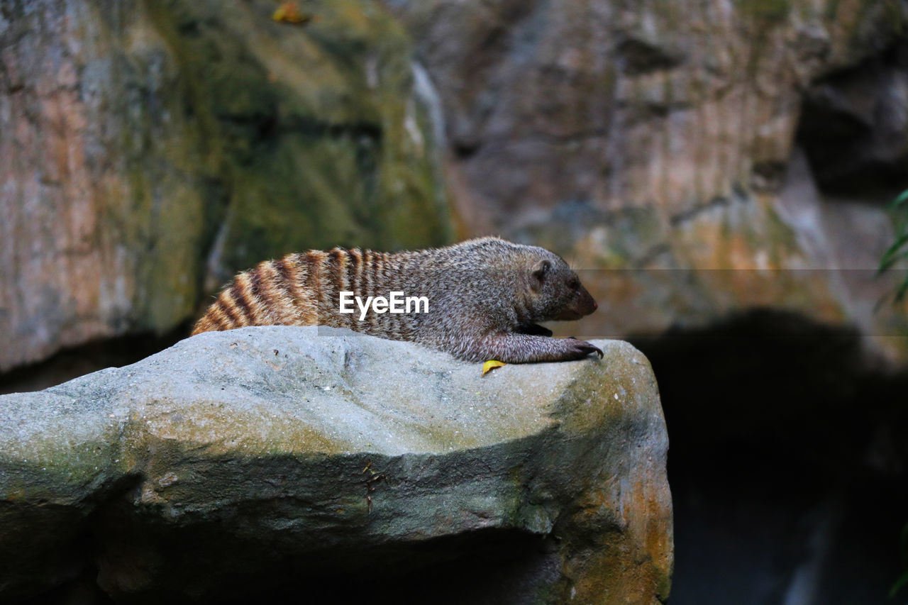animals in the wild, animal wildlife, animal themes, animal, one animal, solid, rock, vertebrate, rock - object, focus on foreground, no people, day, close-up, nature, outdoors, mammal, zoology, tree, water, selective focus, marine