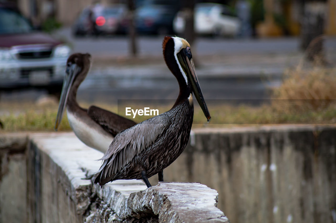 animals in the wild, animal themes, animal wildlife, vertebrate, animal, bird, focus on foreground, one animal, day, no people, nature, water, perching, outdoors, close-up, railing, wall, wood - material, lake