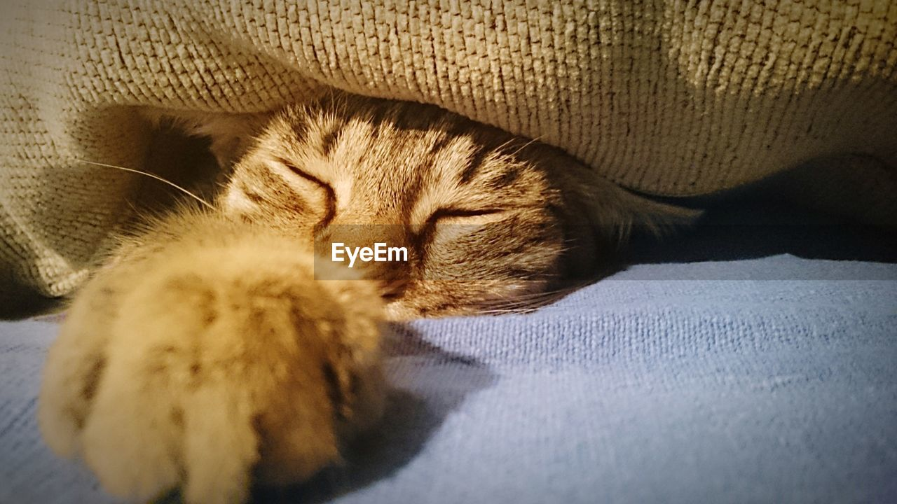 CLOSE-UP OF CAT SLEEPING ON BLANKET