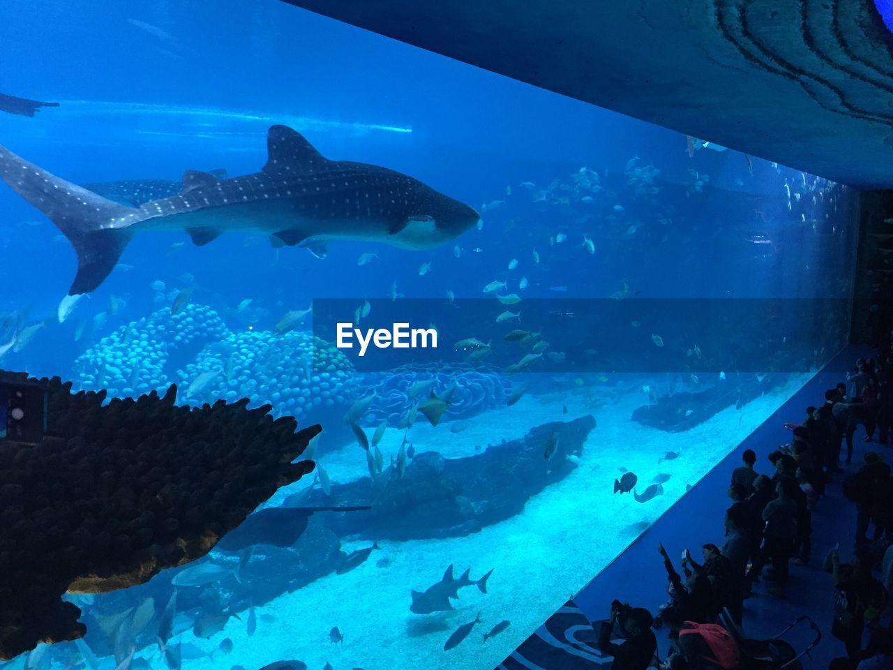 People Watching Whale Shark In Aquarium