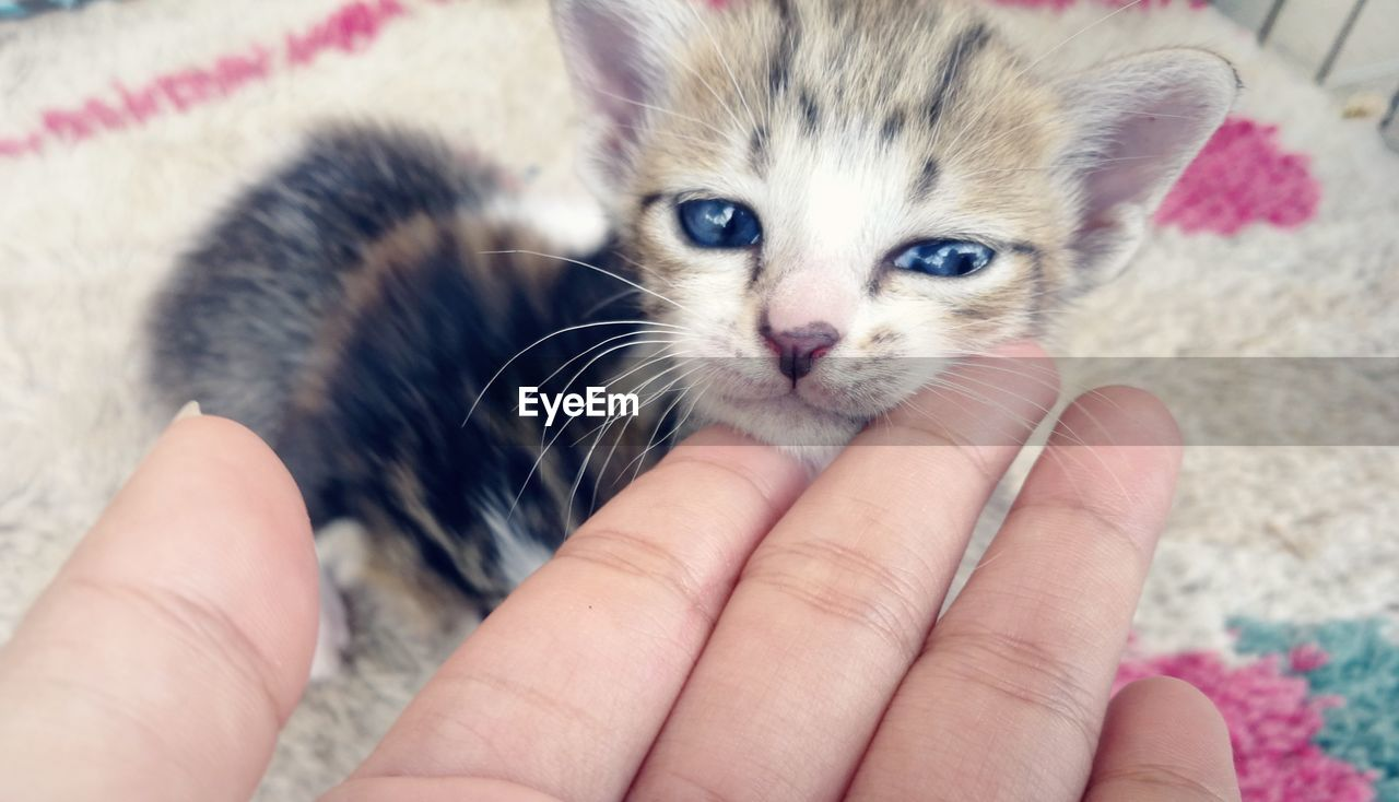 CLOSE-UP OF PERSON HOLDING KITTEN