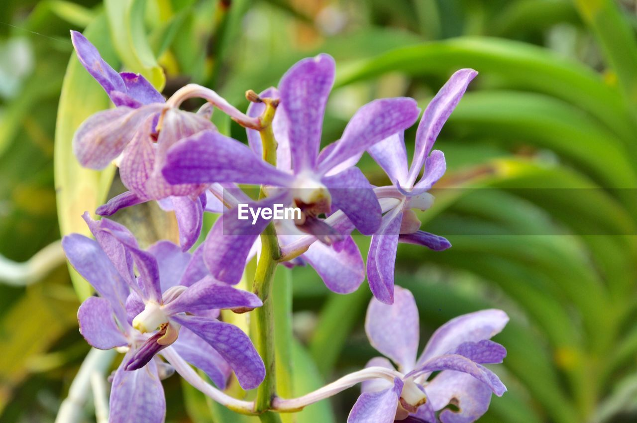 flower, flowering plant, fragility, vulnerability, plant, beauty in nature, growth, petal, freshness, close-up, purple, inflorescence, nature, flower head, no people, day, focus on foreground, botany, outdoors, plant part