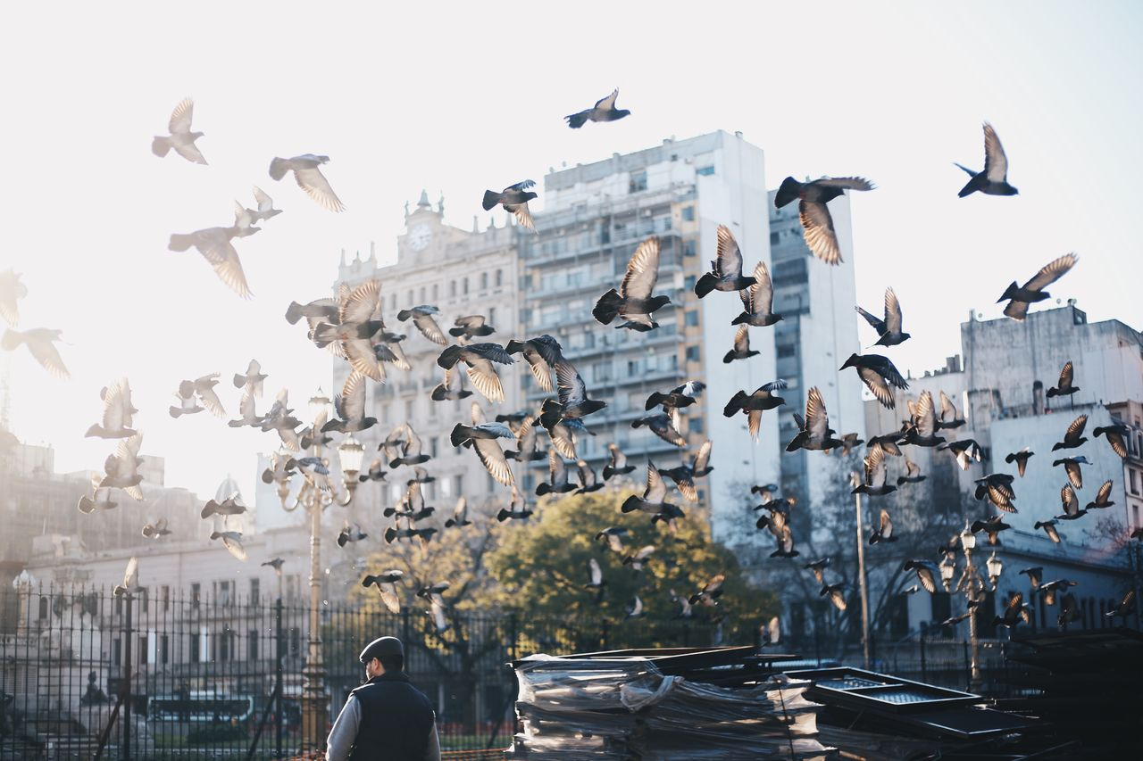 SEAGULLS FLYING IN CITY AGAINST SKY