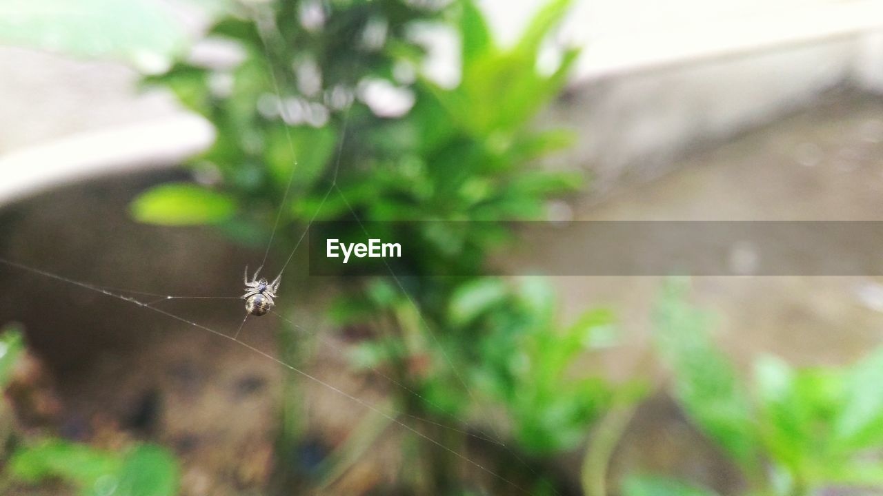 spider, one animal, insect, animal themes, spider web, focus on foreground, animals in the wild, close-up, nature, day, animal wildlife, no people, fragility, outdoors