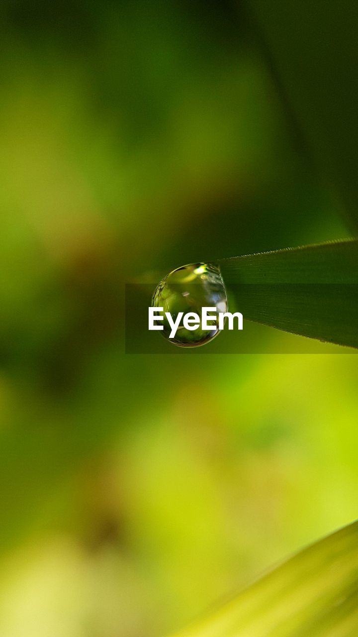plant, close-up, beauty in nature, nature, no people, drop, vulnerability, growth, fragility, focus on foreground, green color, selective focus, day, water, plant part, leaf, outdoors, freshness, tranquility, purity, raindrop, dew