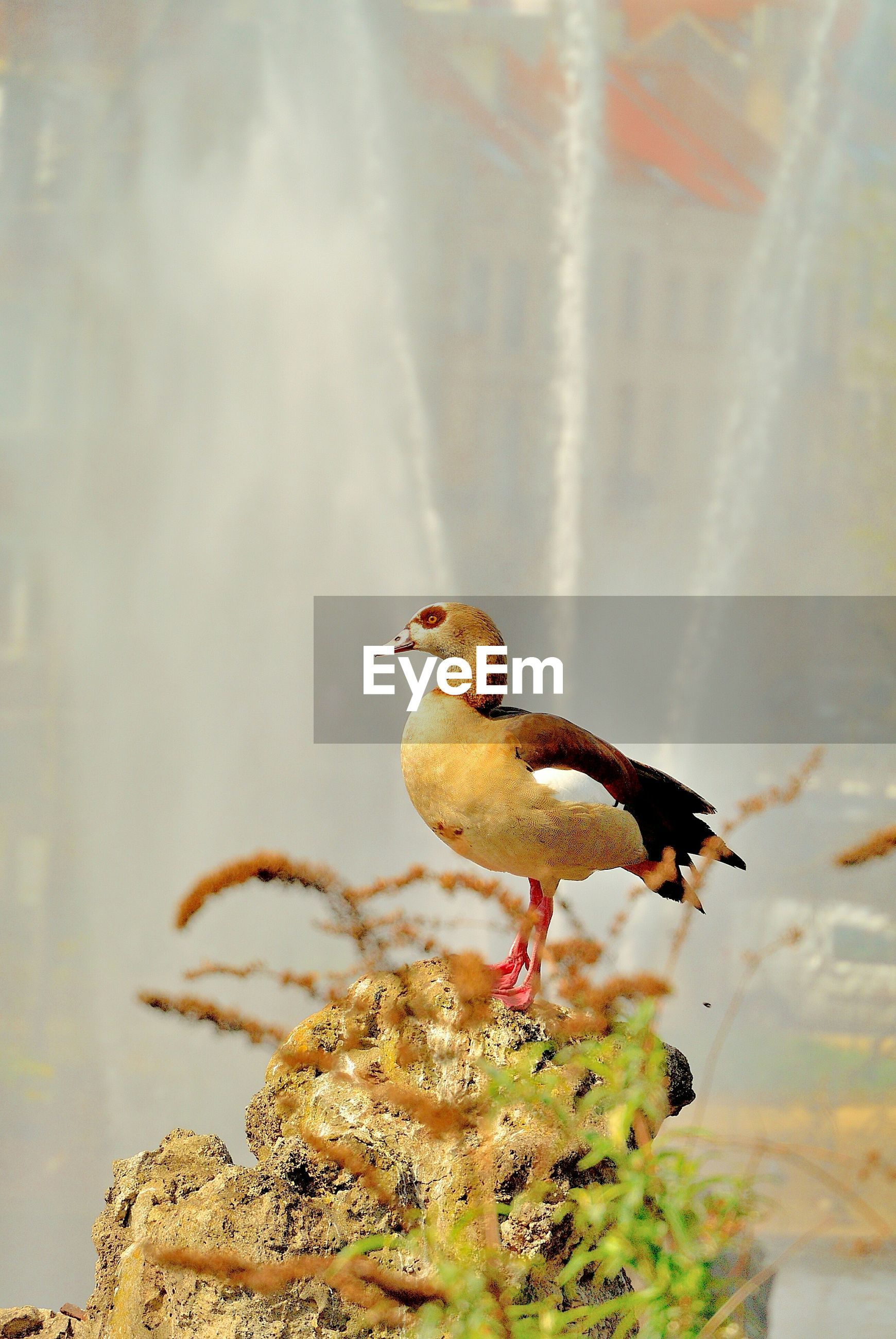 Bird perching on rock against waterfall in forest