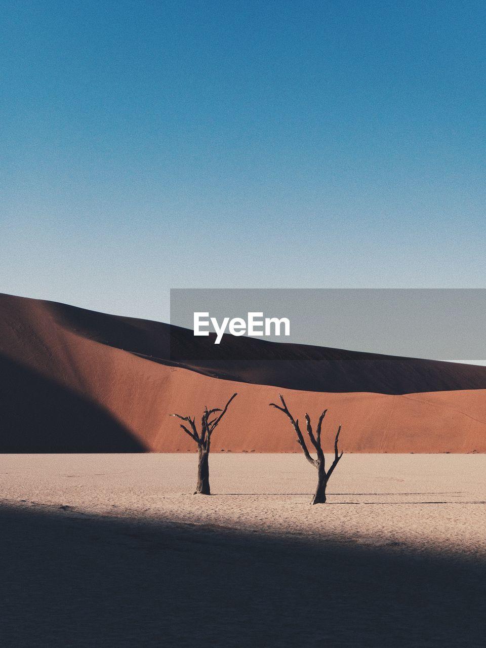 Bare Trees On Sand At Desert Against Clear Sky