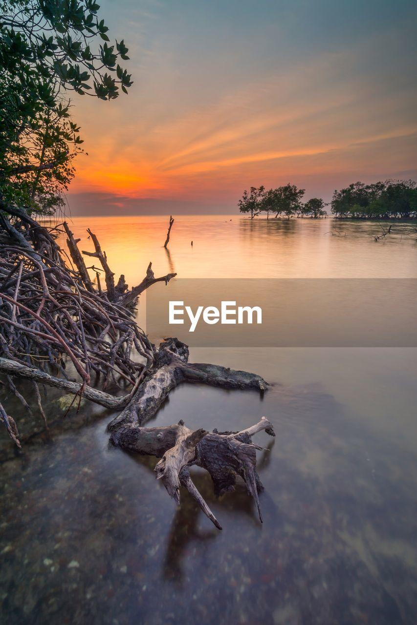 sunset, water, sky, scenics - nature, orange color, beauty in nature, tranquility, tree, tranquil scene, nature, cloud - sky, plant, non-urban scene, lake, no people, wood - material, driftwood, idyllic, reflection, wood, outdoors, dead plant