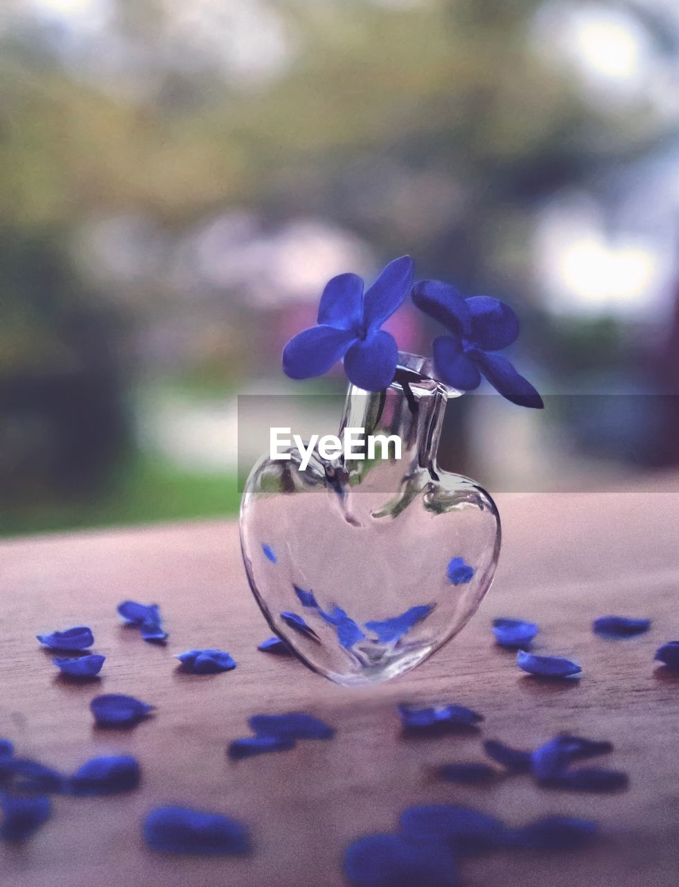flowering plant, flower, plant, close-up, purple, table, selective focus, blue, nature, glass - material, vulnerability, fragility, no people, vase, freshness, focus on foreground, beauty in nature, container, day, indoors, flower head, silver colored
