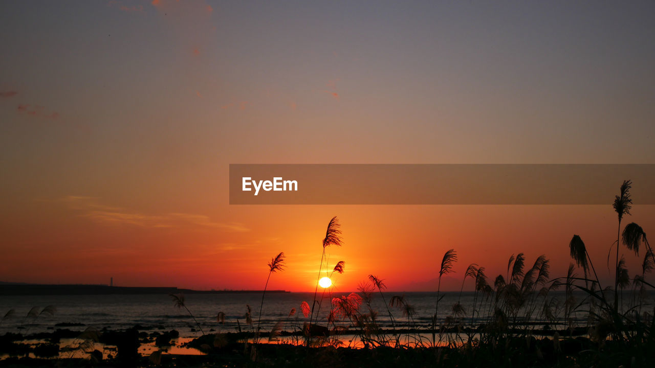 sunset, sky, orange color, water, scenics - nature, beauty in nature, silhouette, nature, tranquil scene, tranquility, sun, sea, idyllic, non-urban scene, plant, copy space, outdoors, no people, land