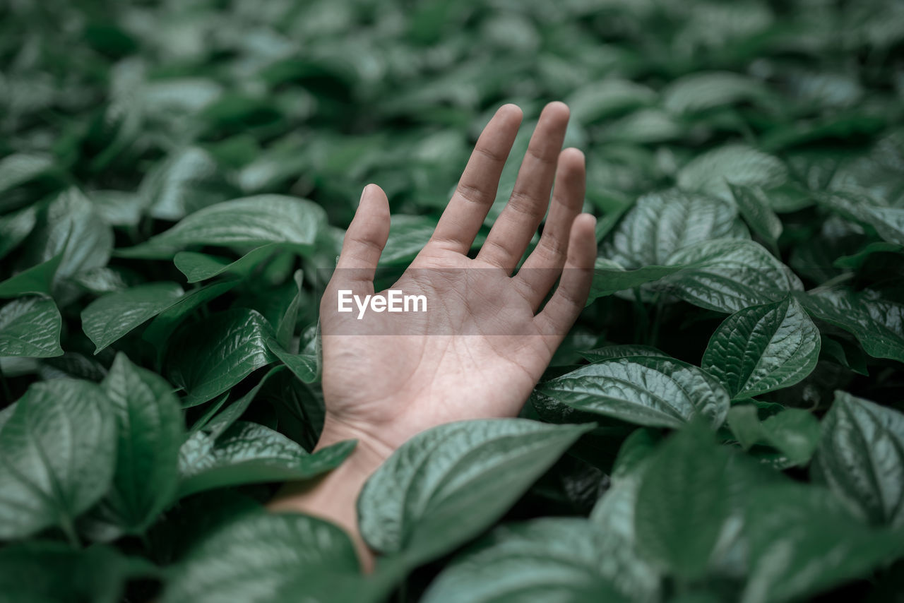 Close-Up Of Cropped Hand Amidst Leaves