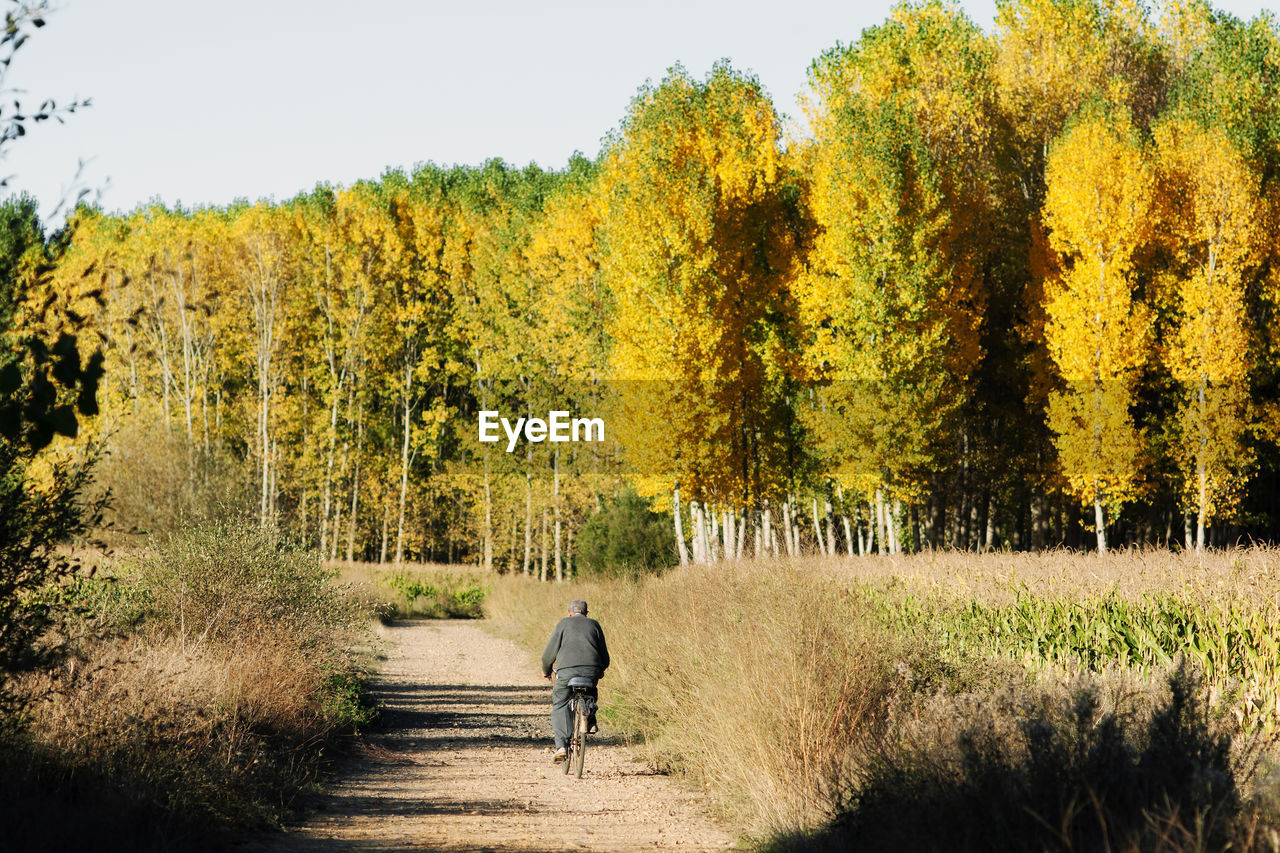 Rear View Of Man Riding Bicycle On Dirt Road Against Trees During Sunny Day