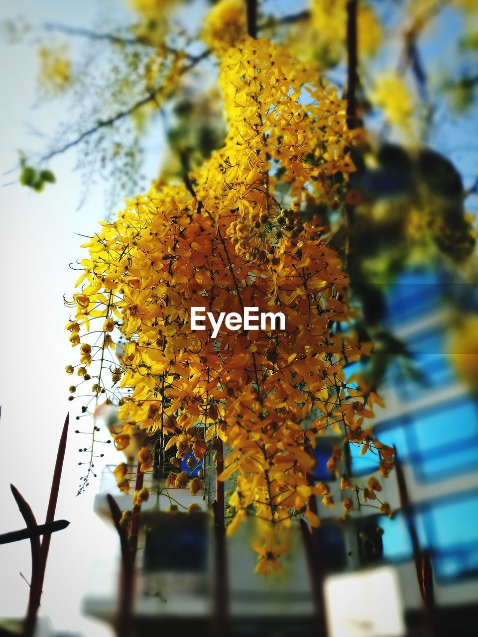 nature, growth, autumn, day, yellow, tree, beauty in nature, low angle view, no people, outdoors, change, close-up, branch, fragility, flower, sky