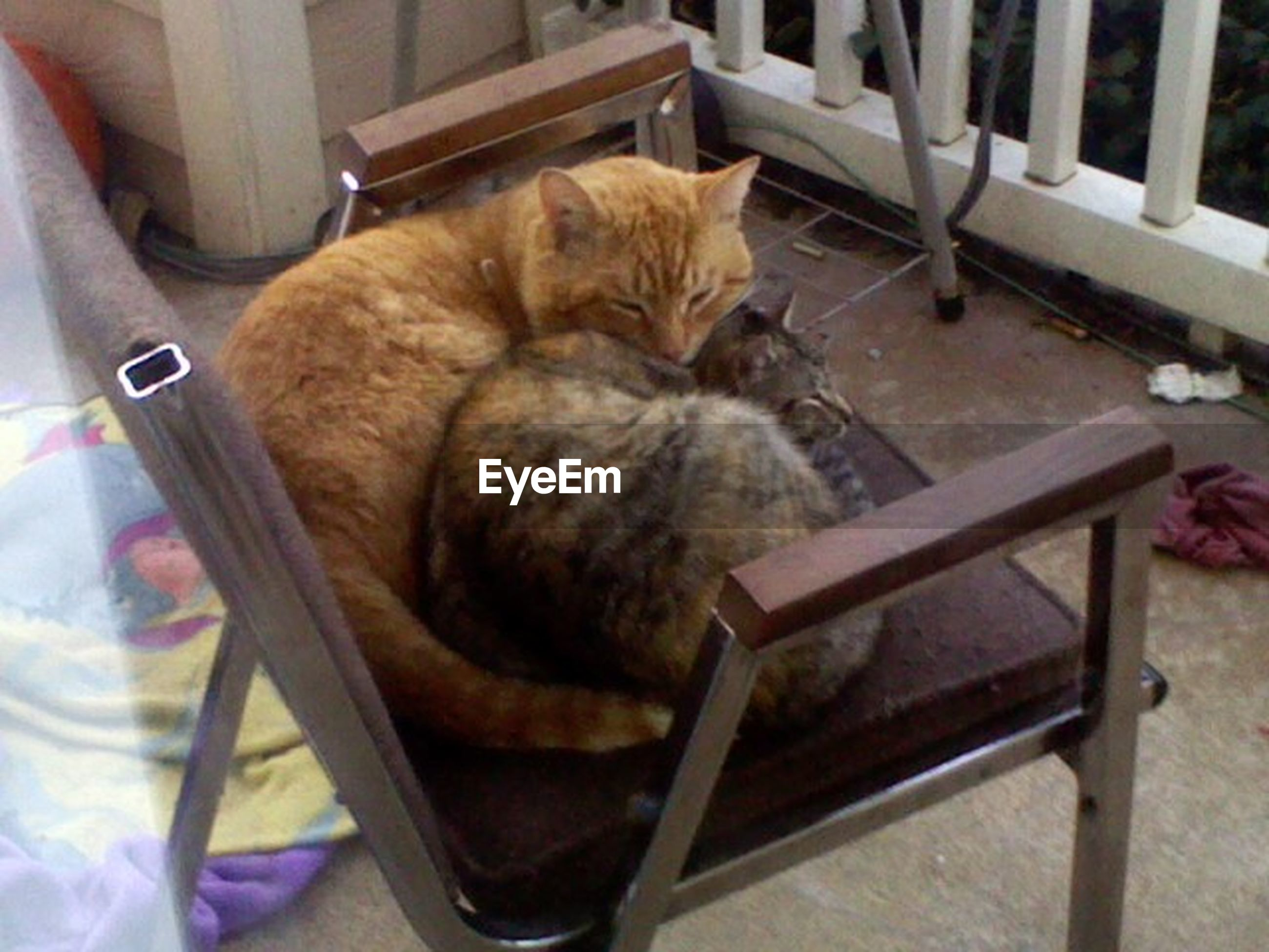 domestic animals, pets, animal themes, mammal, one animal, domestic cat, cat, indoors, relaxation, feline, sleeping, resting, high angle view, lying down, whisker, sitting, no people, chair, home interior, full length